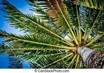 estate, albero, effetto, filtro, palma, retro