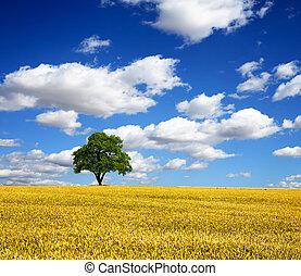 estate, albero, verde, paesaggio