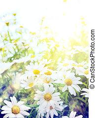 estate, arte, alto, luminoso, fondo, light;, naturale, fiori