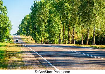 estate, automobile, foresta verde, giorno, strada