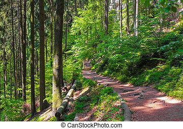 estate, ceco, foresta, repubblica, sentiero, verde