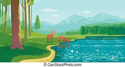 estate, cervo, lago, paesaggio