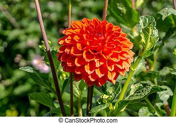 estate, fiori, sole, colorato, giardino