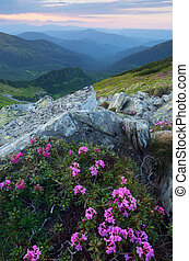 estate, fiori, tramonto, montagne