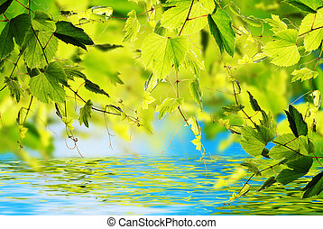 estate, fondo, natura