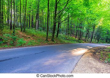 estate, foresta, strada, giorno