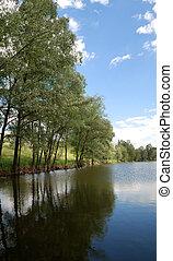 estate, lago, e, albero