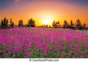 estate, paesaggio, con, fiori viola, su, uno, prato, e, tramonto