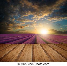 estate, pavimento, legno, vibrante, sopra, giacimento lavanda, tramonto, assi, paesaggio