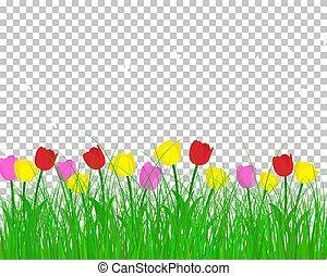 estate, prato, fondo, tulips