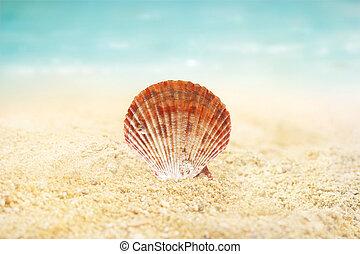 estate, sabbia, conchiglia, spiaggia, fondo