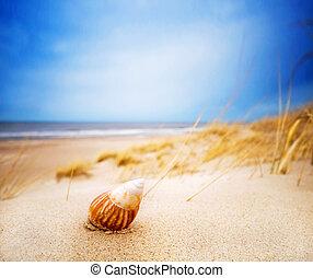 estate, sabbia, conchiglia, spiaggia