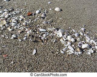 estate, sand., cima, fondo., seashells, spiaggia, vista