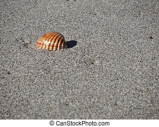 estate, sand., singolo, fondo, seashell, spiaggia