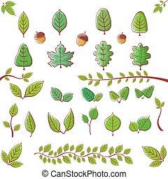 estate, set, foglia, foglie, isolato, collezione, fondo., elementi, verde, disegno, bianco, icona