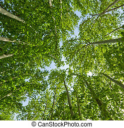estate, sfondo verde, albero