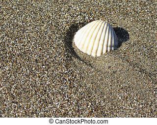estate, sgusciare, sand., cima, fondo., mare, spiaggia, vista