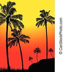 estate, silhouette, astratto, albero, tropicale, palma, foresta