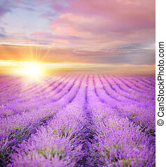 estate, sopra, tramonto, lavanda, field.
