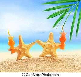 estate, spiaggia sabbia, starfish
