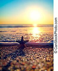 estate, spiaggia,  starfish