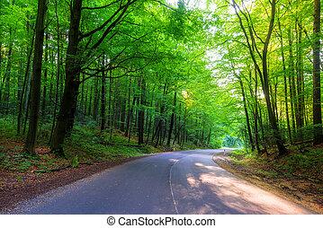 estate, strada, foresta, vuoto, giorno