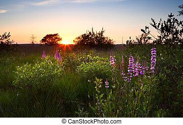 estate, tramonto, sopra, palude, con, wildflowers