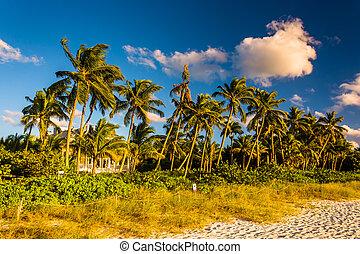 este, florida., fény, bitófák, pálma, nápoly