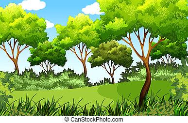 esterno, parco, verde, scena