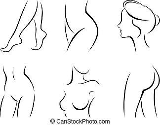 estilizado, cuerpo, conjunto, partes