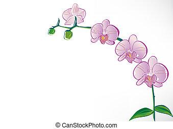 estilizado, orquídea