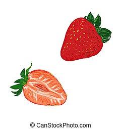 estilo, esboço, vetorial, ilustração, morangos