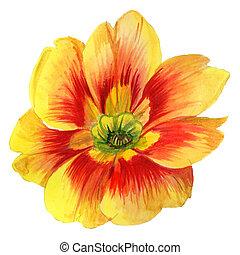 estilo, flor, isolated., acuarela, wildflower, viola