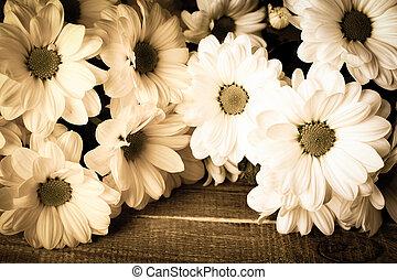 estilo, oxeye, ramo, foto, margarita, sepia., fondo., vendimia, de madera, flores