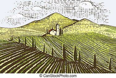estilo, paisagem, antigas, campos, vindima, tuskany, vinhedos, mão, olhar, scratchboard, desenhado, gravado, ou, tatooo