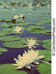 estilo, vindima, -, lago, retro, água-lírio, flores