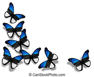 Estonian flag butterflies, isolated on white background