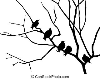 estornino, rama, silueta, árbol