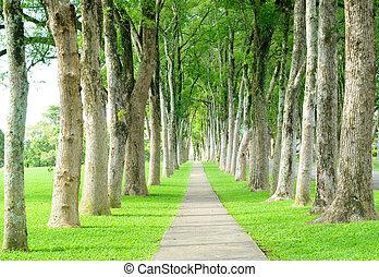 estrada, através, fila, de, árvores