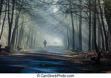 estrada, e, raios sol, em, forte, nevoeiro, em, a, floresta,...