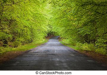 estrada, em, a, árvore, túnel
