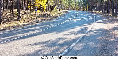 estrada, em, floresta