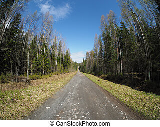 estrada, em, primavera, floresta