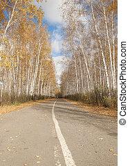 estrada, em, um, outono, vidoeiro, floresta