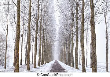 estrada, entre, árvore, filas, em, inverno