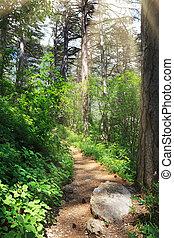 estrada, floresta, profundo