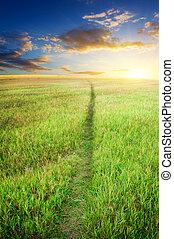 estrada, ligado, prado verde
