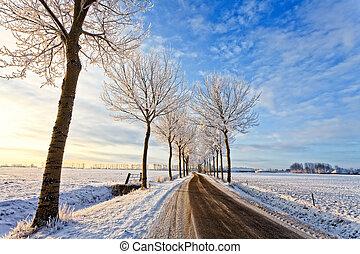 estrada, paisagem, branca, árvores inverno