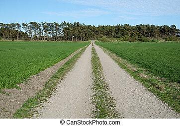 estrada pedregulho, em, um, paisagem verde