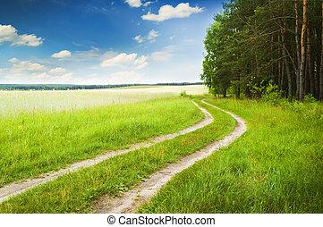 estrada, perto, madeira, ligado, um, declínio